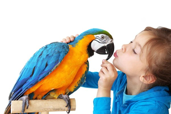 Image result for how to train your baby parrot