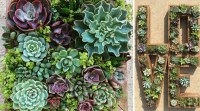 10 Creative Succulent Garden Ideas | The Succulent Source