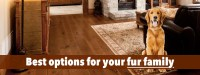Choosing The Best Hardwood Floors For Dogs: 3 Factors you ...