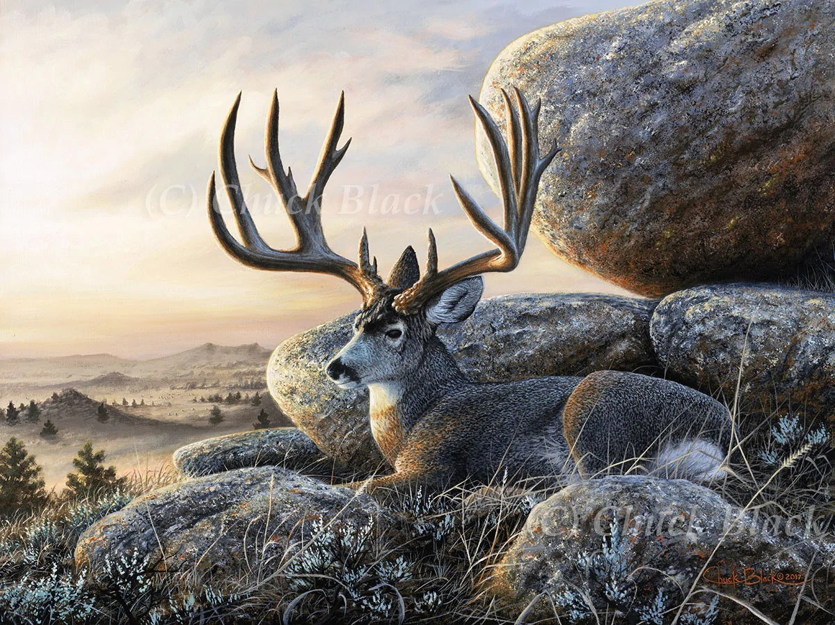 "Mule Deer Buck Canvas Art Print - "" Law Maker"" Wildlife"