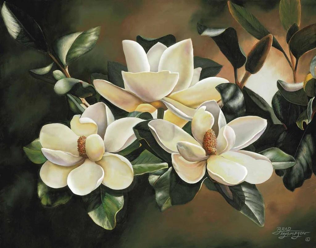 Morning Magnolias Brad Thompson Fine Art