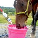 The Horse Hydrator