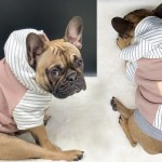 Shop French Bulldog Harnesses Pajamas Dog Hoodies More