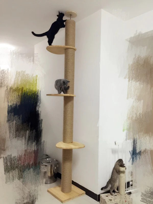 Ceiling Cat Tree Www Gradschoolfairs Com