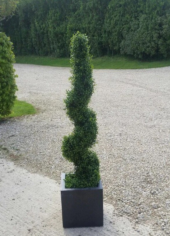 Spiral Boxwood Topiary Tree 120cm Outdoor Quality