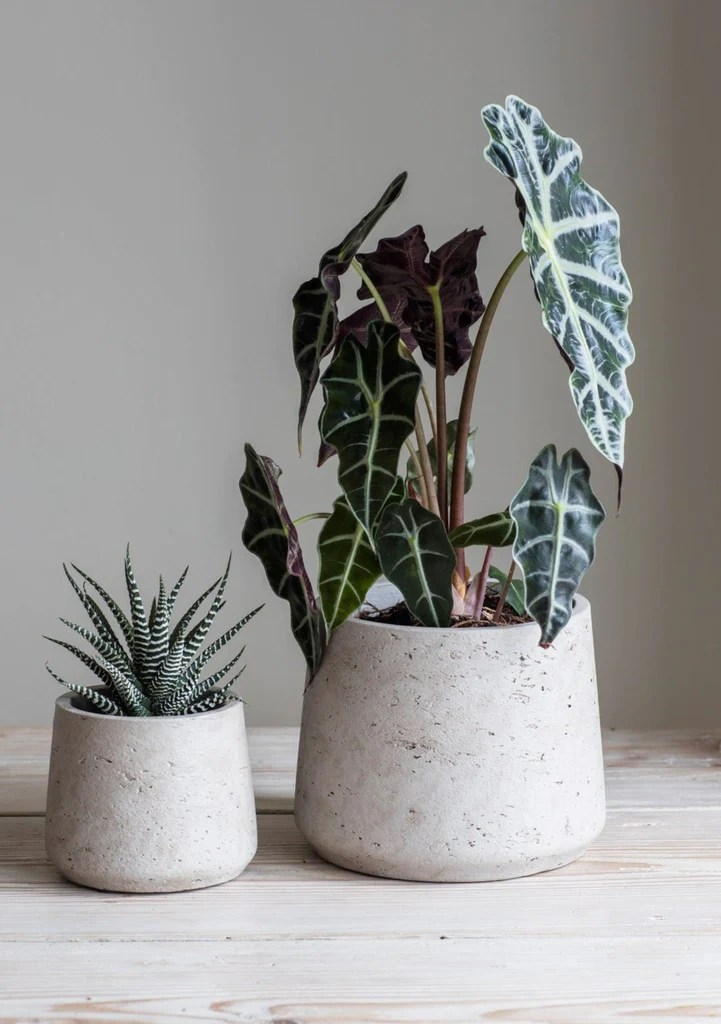 Tall Trough Planters