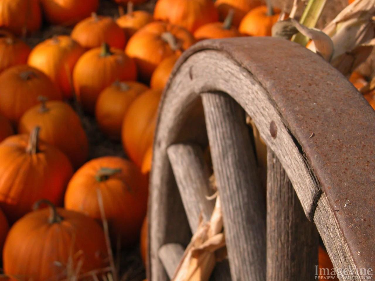 Fall Thanksgiving Wallpaper Free Thanksgiving Backgrounds Imagevine