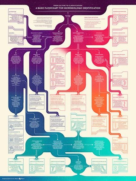 Morphology Bacterial Chart