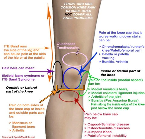 front leg ligament diagram zig unit wiring read me if you have knee pain therafit shoe
