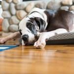 Buying Tips For Dog Cooling Beds Keepdoggiesafe Com Keep Doggie Safe