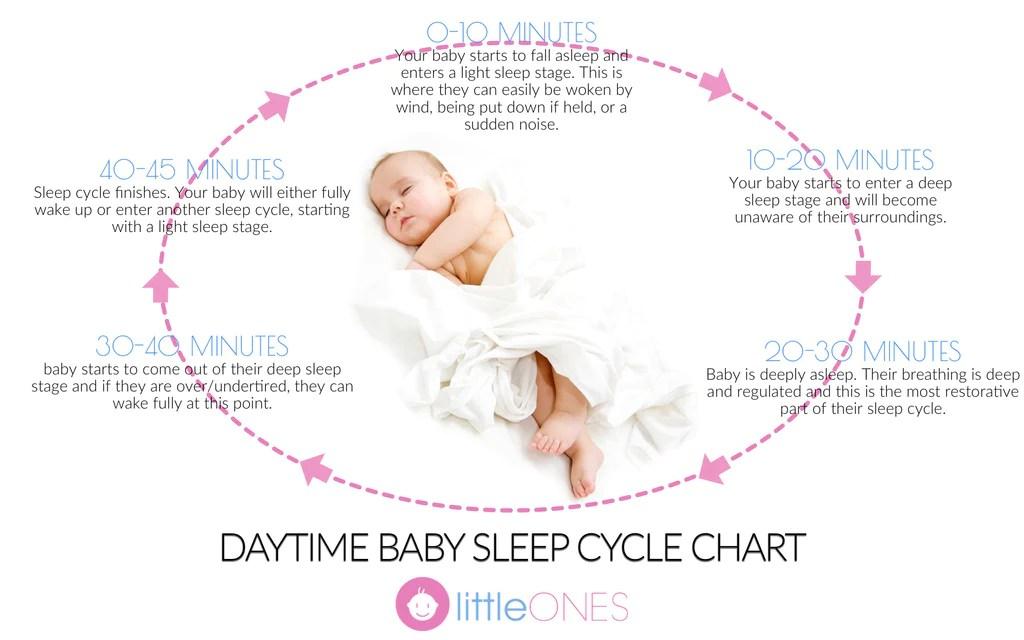 Baby sleep cycle chart also naps in  nutshell rh littleones
