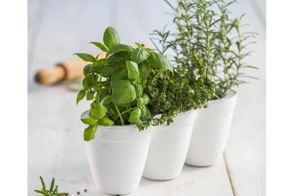 Keter Raised Garden Planter
