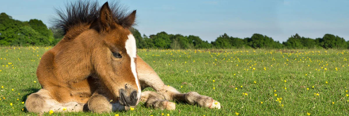 the blissful horses baby foal