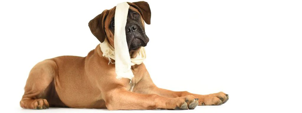First Aid: What to Do if your Dog's Heart Stops Beating ...