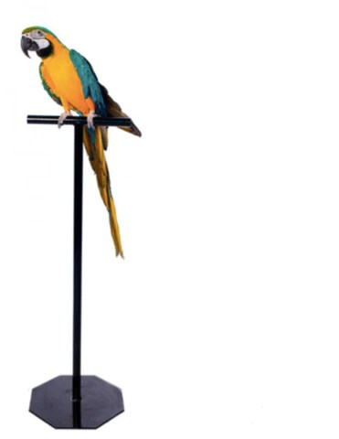 parrot training t stands