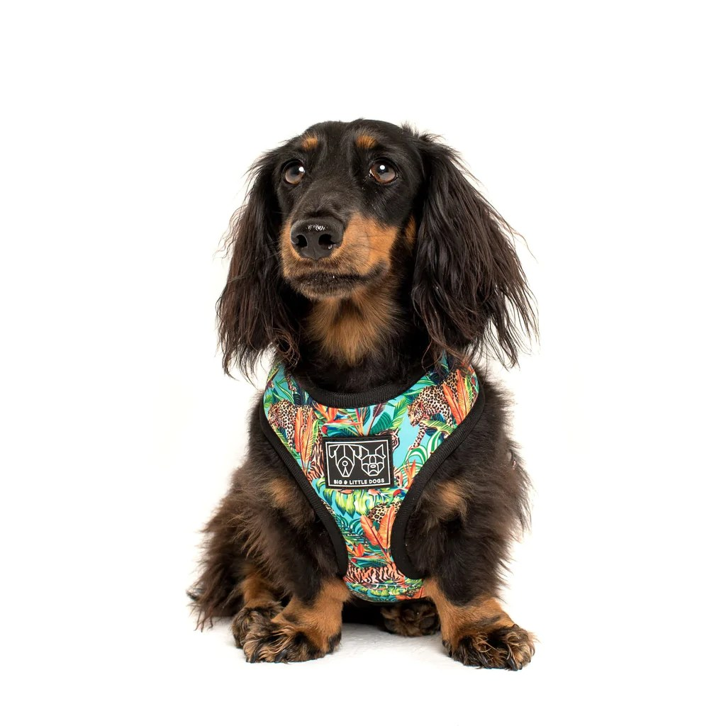 hight resolution of  king of the jungle leopard reversible dog harness