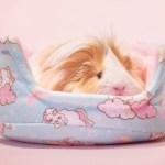 Unipiggie Cuddle Cup Guinea Pig Bed Guineapig Wheekly Uk
