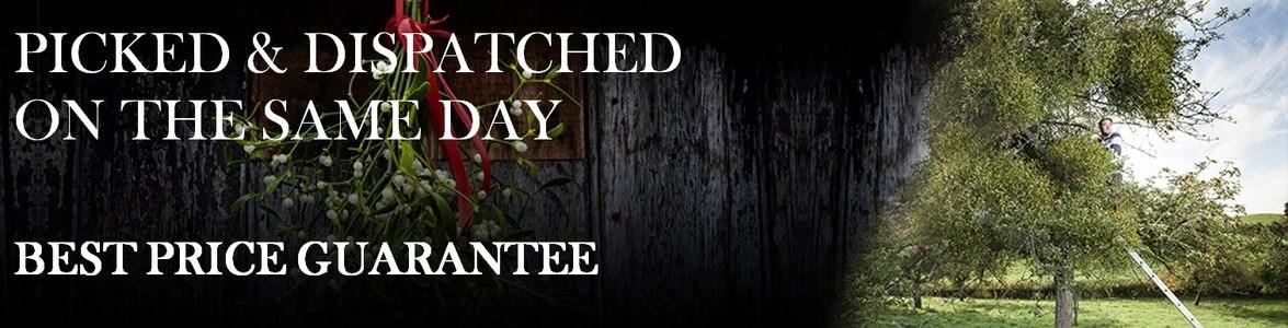 Buy Fresh Organic Mistletoe Online - Buy Mistletoe