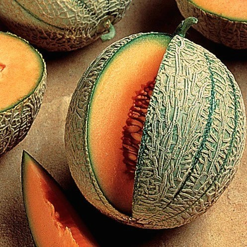 Minnesota Midget Melon - Cucumis melo – Smart Seeds Emporium