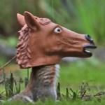 Horse Head Squirrel Feeder Archie Mcphee Co