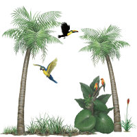 Tropical Rainforest Sticker Collection - Create your own ...