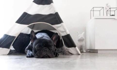 Dog Safe Space