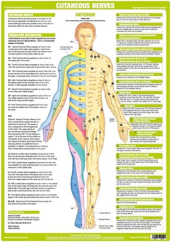 human leg anatomy diagram single phase reversing contactor wiring cutaneous nerves chart - anterior