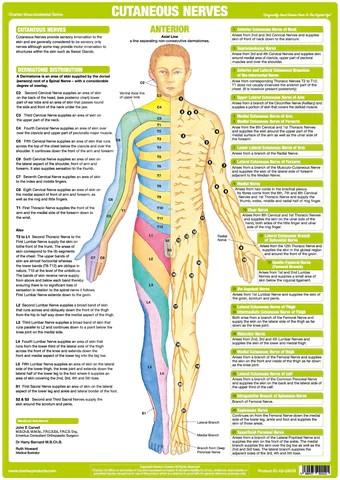 hand nerves diagram dual 4 ohm sub wiring cutaneous anatomy chart - anterior
