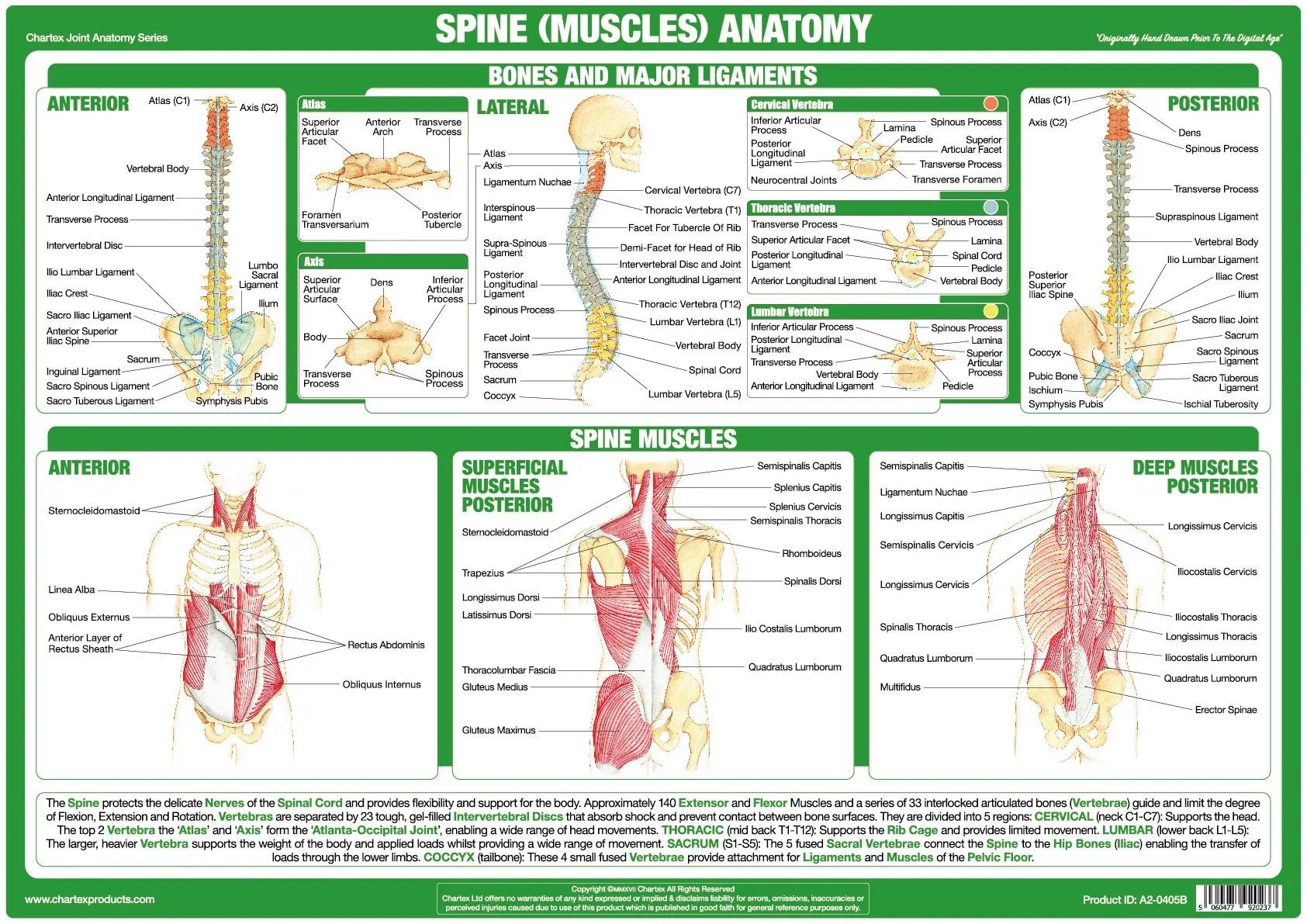 spine diagram chart [ 1685 x 1191 Pixel ]