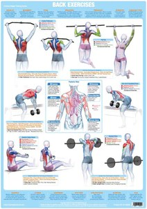 Back muscles exercise weight training chart also bodybuilding and muscle anatomy poster rh chartexproducts