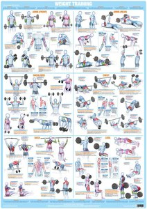 also whole body workout weight training exercise chart  chartex ltd rh chartexproducts