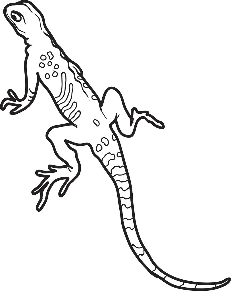 Lizard Coloring Sheet : lizard, coloring, sheet, Printable, Lizard, Coloring, SupplyMe