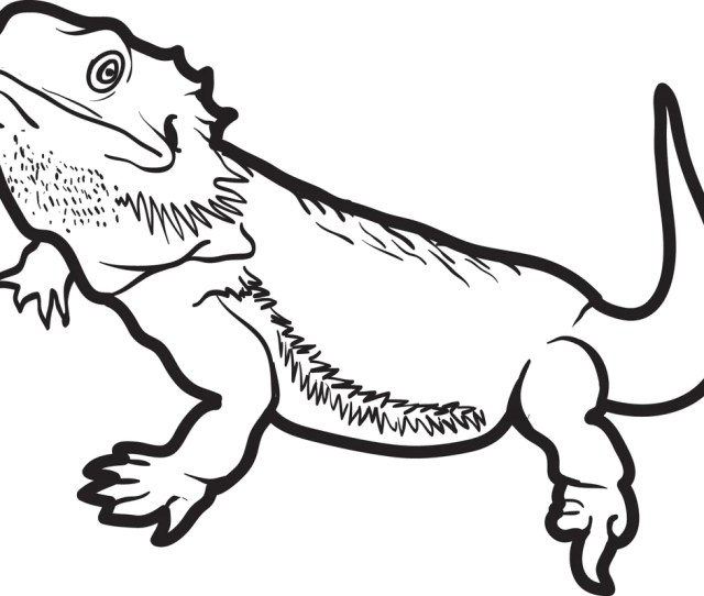 Printable Lizard Coloring Page For Kids  Supplyme