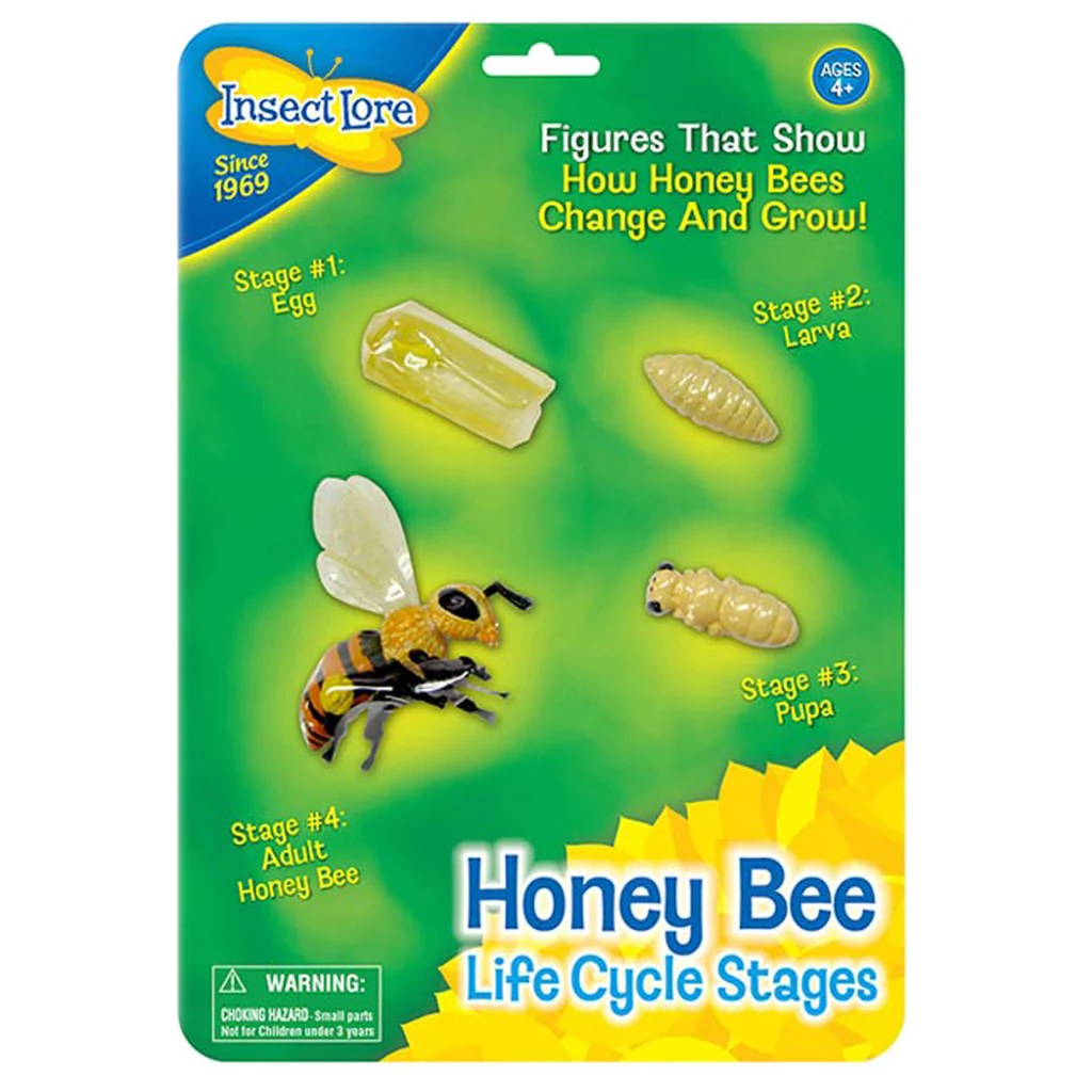 Insect Lore Bee Life Cycle Stages   ILP02215 – SupplyMe [ 1024 x 1024 Pixel ]