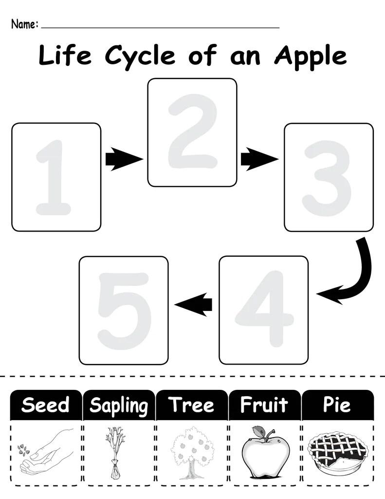 medium resolution of Life Cycle of an Apple\ Printable Worksheet – SupplyMe