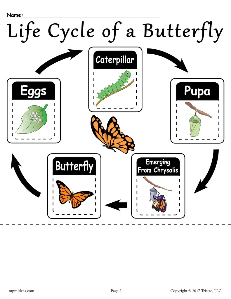 hight resolution of Life Cycle of a Butterfly\ Printable Worksheet – SupplyMe