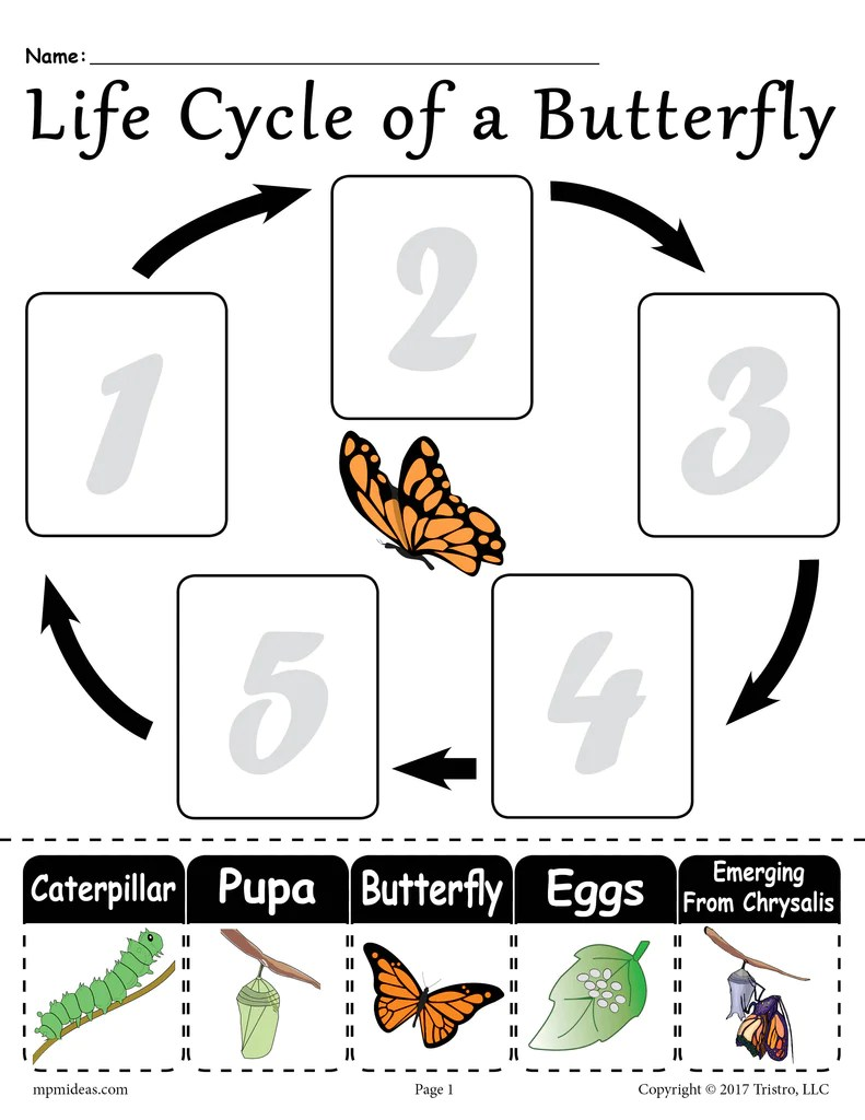 Life Cycle of a Butterfly\ Printable Worksheet – SupplyMe [ 1024 x 791 Pixel ]