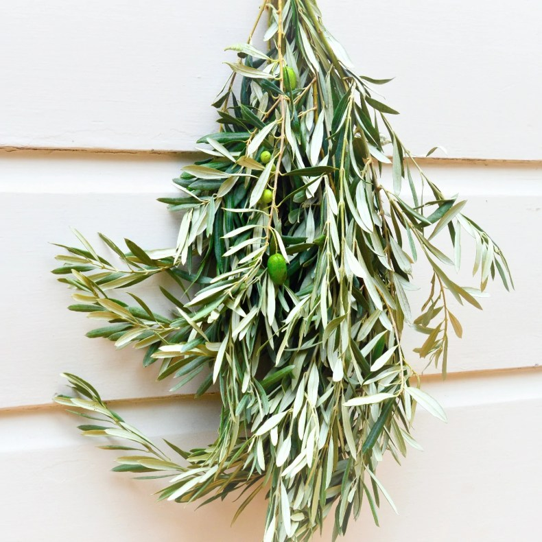 Image result for OLIVE BRANCHES