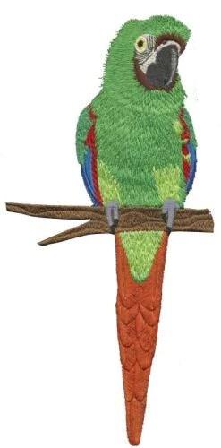 severe macaw mini macaw