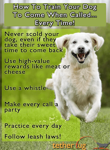 How To Train Dog To Always Come When Called