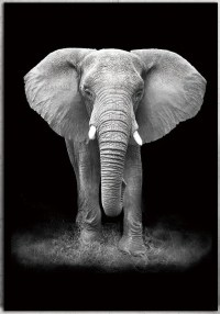 Black and White Animal Photography Wall Artwork | Canvas ...