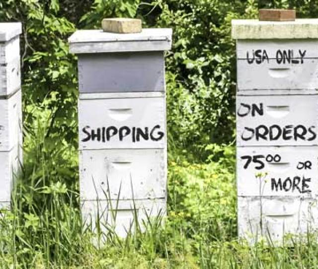Free Shipping Policy Durhams Bee Farm