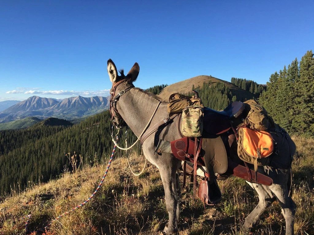 Cleaning and Caring for Your Pack Pannier | Mountain Ridge ...