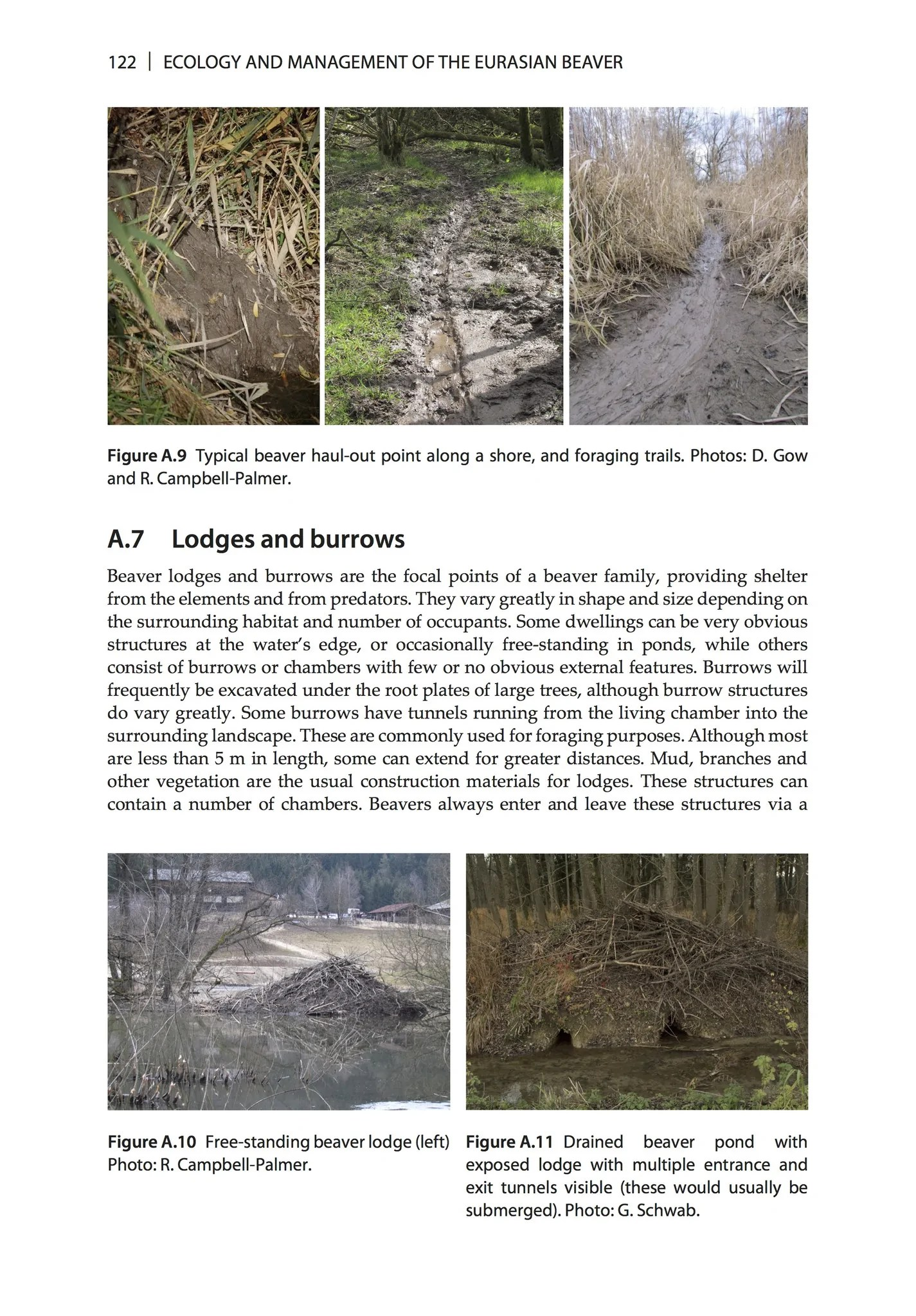 hight resolution of inside a beaver lodge diagram