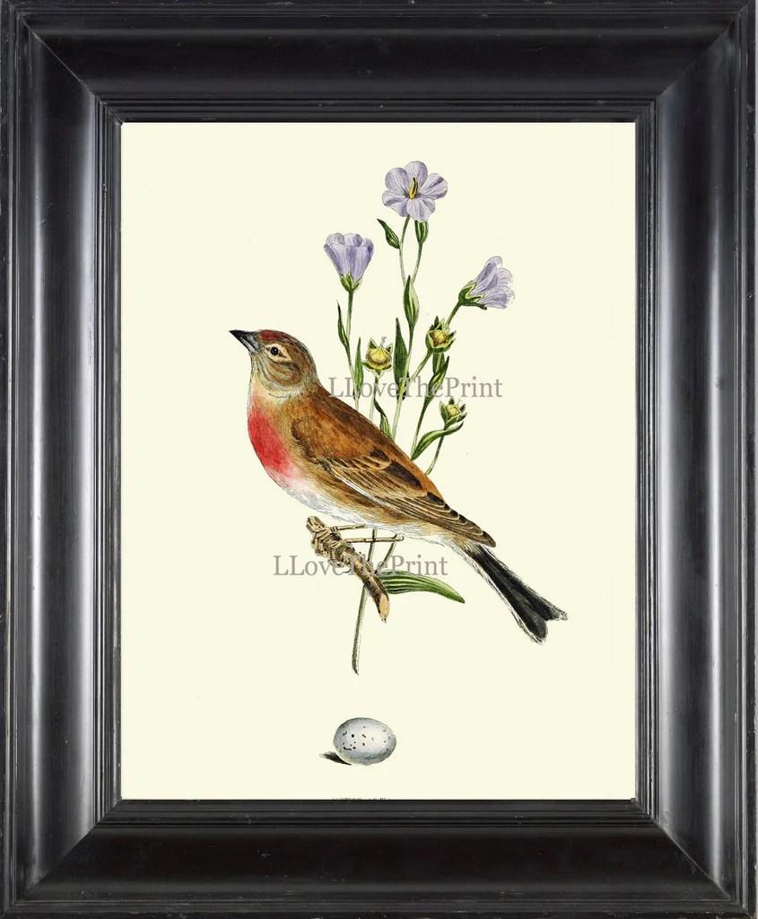 Antique Bird Print Art 10 Beautiful Songbird Blue Flowers
