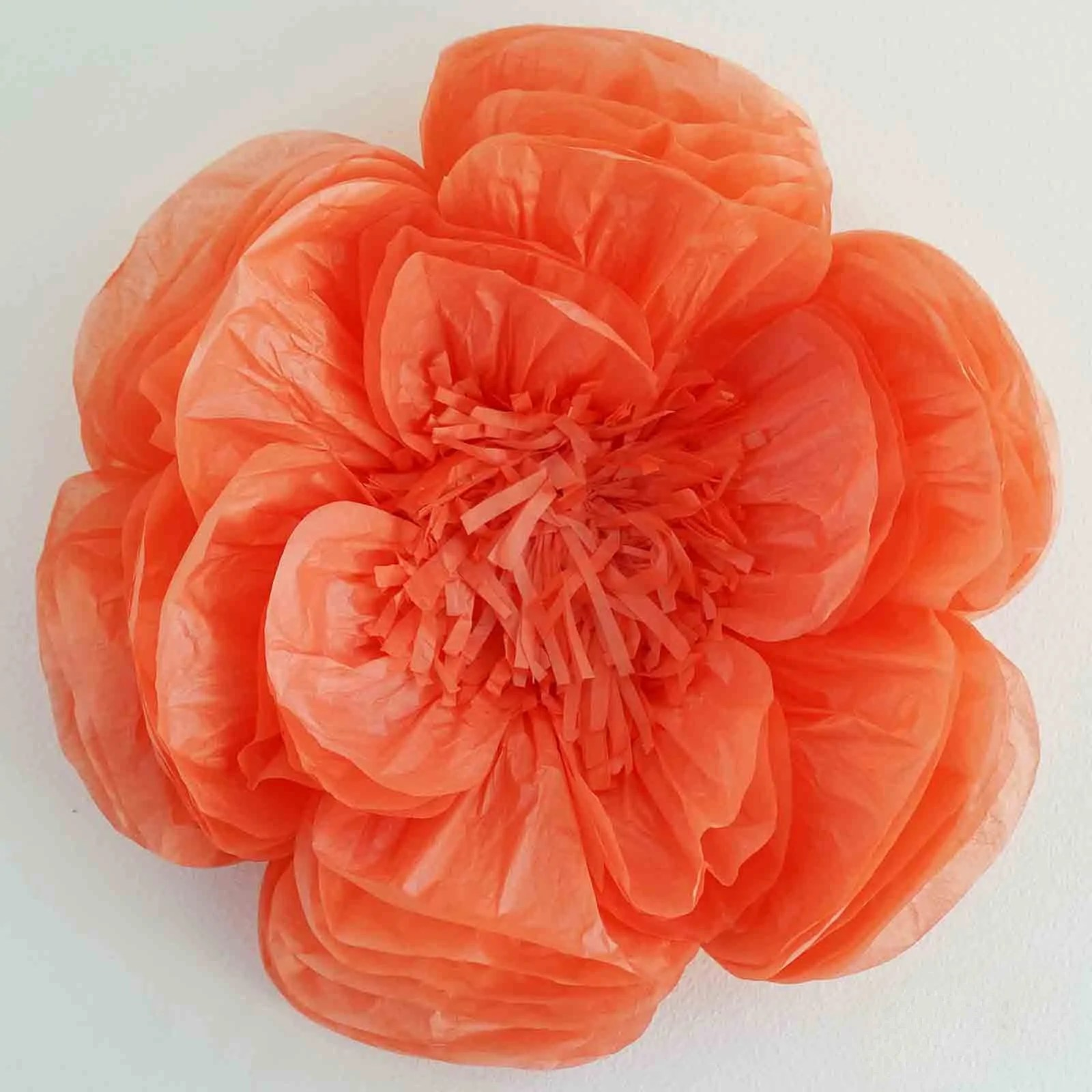 20 peony coral 3d