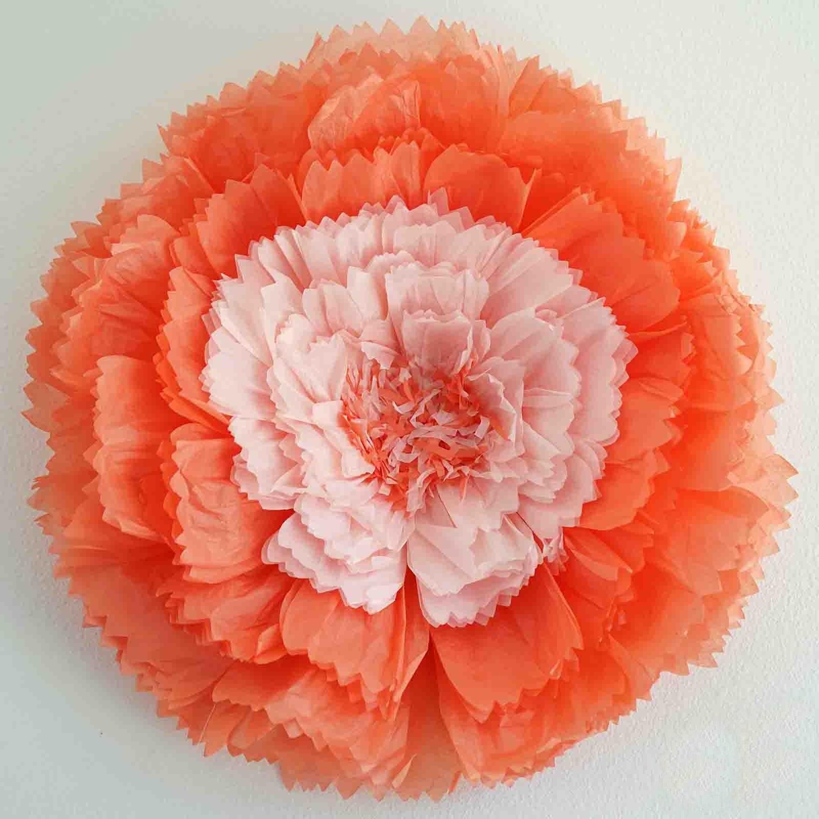 20 carnation coral 3d