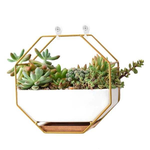 Hanging Indoor Wall Planter Forever Anniversary