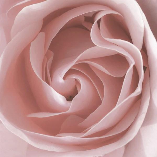 Contemporary Blush Pink Rose Wall Decor Printable Art