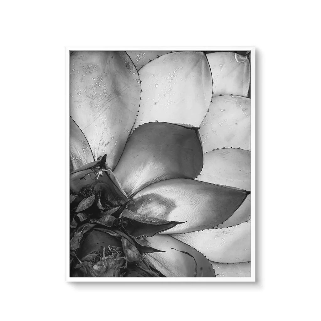 Succulent Cactus Wall Art Printable Modern Black And White